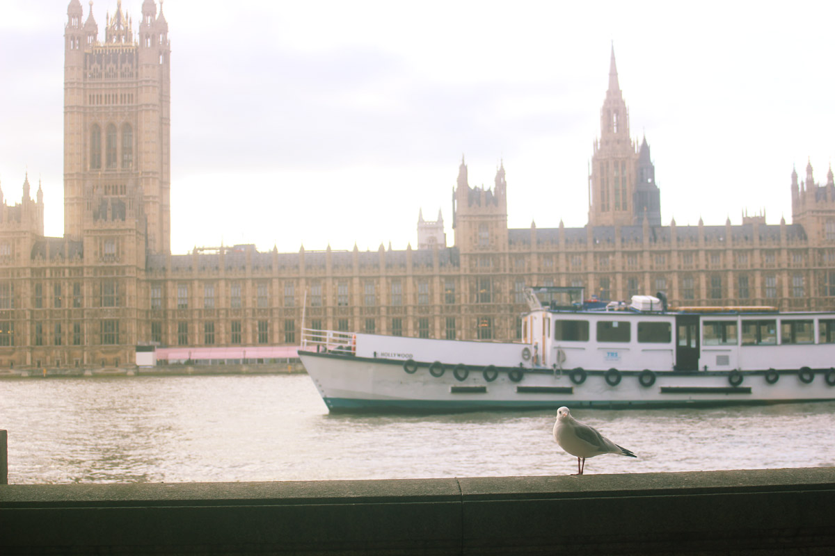 seagull by waterloo rivier thames outside exterior nature