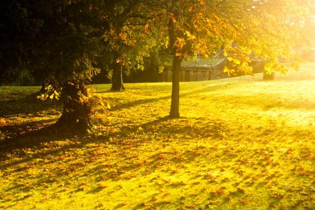 autumn molesey wilderness forest exterior garden setting sun dusk evening